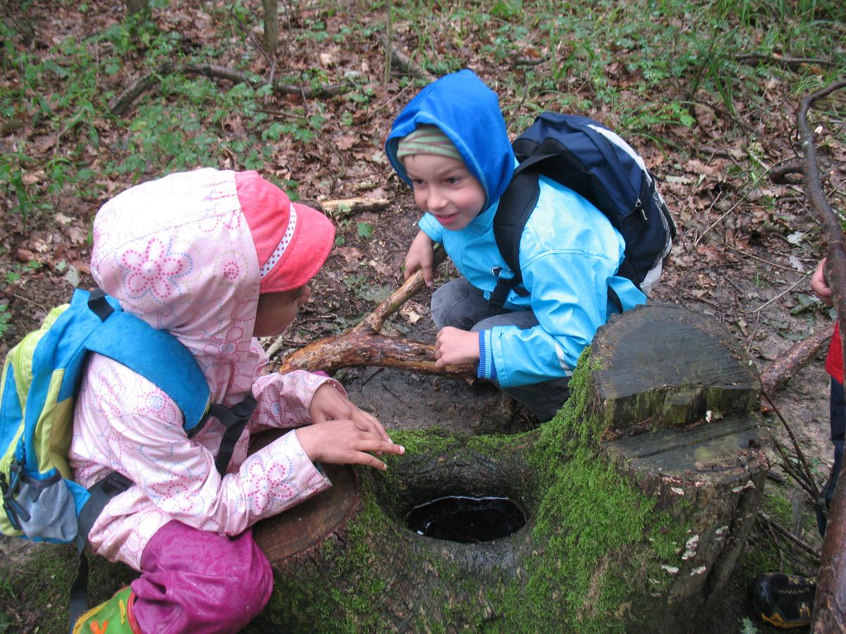 Waldtag und Ausflug